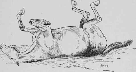 Spasmodic-Colic-3-Horse-rolling-in-pain