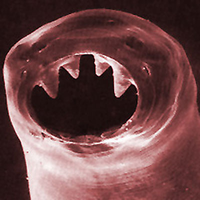 hookworm-400 (1)
